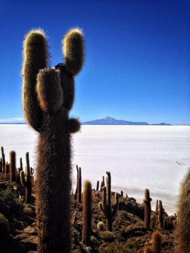 Salar De Uyuni Salt Flats Isla Incahuasi Inkawasi Lone Big Cactus Bolivia